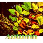 """""""Autumn Leaves"""" by annemade-art"""