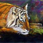 """""""Tiger"""" by jcampbellsimmons"""