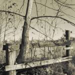"""""""Tree and Fence"""" by CR8ONM"""
