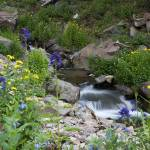 """Wildflowers & Owl Creek"" by studio4-2"
