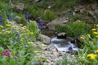 Wildflowers & Owl Creek
