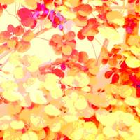 Red and Yellow Leaves Square