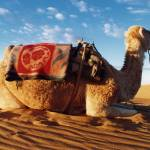"""""""Seated Camel"""" by Photoclassics"""