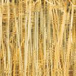 """Reflected Reeds"" by studio4-2"