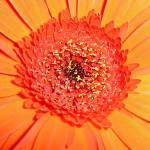 """Orange crush"" by LoraxLady"