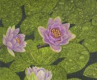 Fine Art Prints Water Lilies Wall Art Lily Lotus