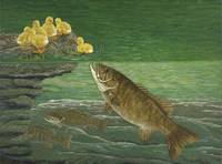 Fine Art Print Bass Smallmouth Fish Fishing Ducks