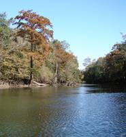 Chipola River Fall 023