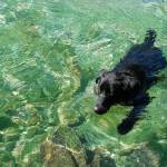 """Black Dog Green Water"" by thomasdodson"
