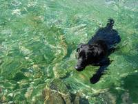 Black Dog Green Water