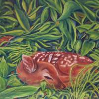 Jessica's Fawn Art Prints & Posters by Everett Cooper