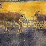 """Deer Study One"" by artistfaye"
