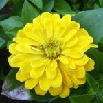 """Yellow on Lush"" by Infinitelydigital"