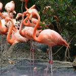 """Flamingo Happy Hour"" by Infinitelydigital"