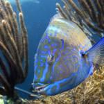 """""""Blue Fish"""" by Infinitelydigital"""