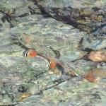 """Fine Art Prints Trout Water Brook Trout Fish Art"" by BasleeTroutman"