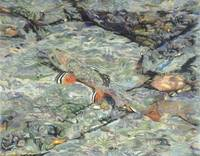 Fine Art Prints Trout Water Brook Trout Fish Art