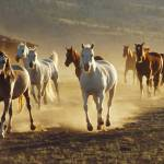 """Horses galloping"" by ninafuller"