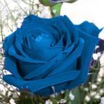 """""""aqua rose"""" by chicachick"""