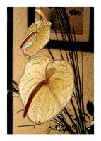Anthurium Repose