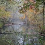 """Foggy-Creek"" by jones3006"