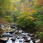 """Mountain-Stream"" by jones3006"