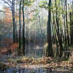 """""""Swamp-in-Fall"""" by jones3006"""
