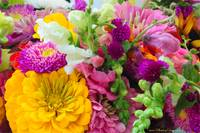 Farm Market Flowers(2) 8109