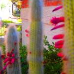 """CACTUS BLOOM AT SUNSET"" by joyfulsunrise"