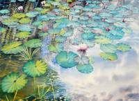 Waterlilies Colllection  II-08