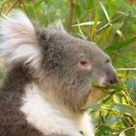 """""""Australia (www.viajar24h.com)-5"""" by foto"""