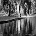 """Weeping Willow Tree Visual Poetry"" by PhotographsByCarolFAustin"