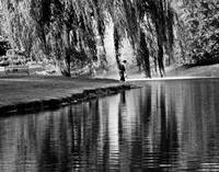 Weeping Willow Tree Visual Poetry
