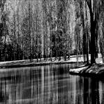 """Weeping Willow Tree Reflections"" by PhotographsByCarolFAustin"
