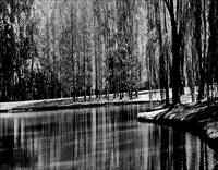 Weeping Willow Tree Reflections