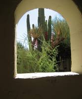 Saguaro Through a Window Arch