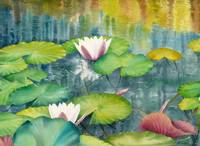 Waterlilies Collection  I-08