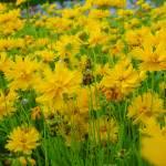 """""""Orlando Flowers"""" by darth_amanda"""