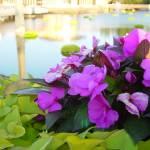"""""""Orlando Flowers 2"""" by darth_amanda"""