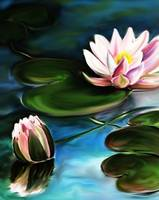 Water Lilies (Large)