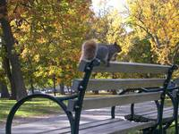 squirrelbench