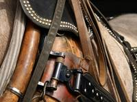 Tools of the Trade ~ Draft horse Harness