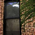 """Brick & Ivy Window..."" by JoanneCoyle"