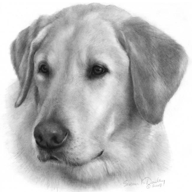 Golden Retriever Graphite Portrait Drawing | Dog Breeds Picture