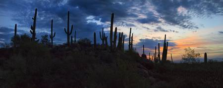 Tucson Sunrise