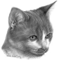 Kitty, Short-Haired Domestic Cat Portrait