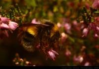 * Beeing a Bumblebee *