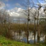 """Florida Everglades"" by DenisW"