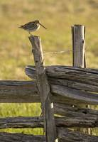 Vermont rail fence with bird
