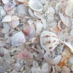 """Sea Shells"" by MacNeil"
